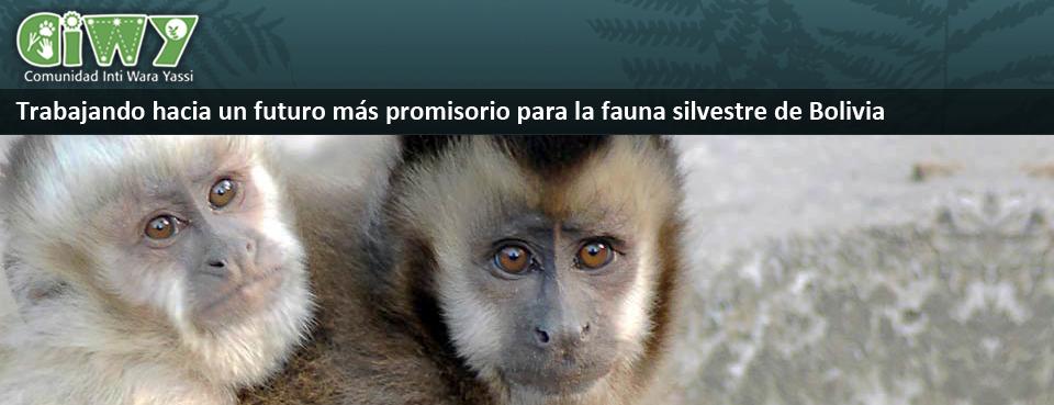 Trabajando hacia un futuro más promisorio para la fauna silvestre de Bolivia