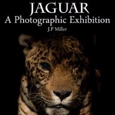 Jaguar: una exhibición fotográfica