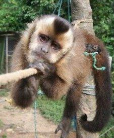 Monkey Mirador