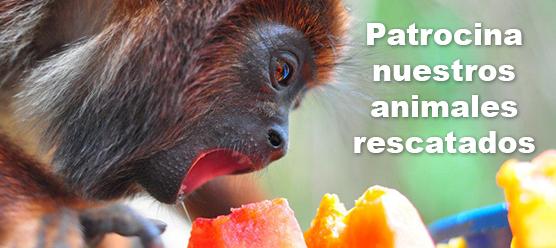 Patrocina nuestros animales rescatados