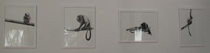 Monos aulladores por Jennifer Hooper