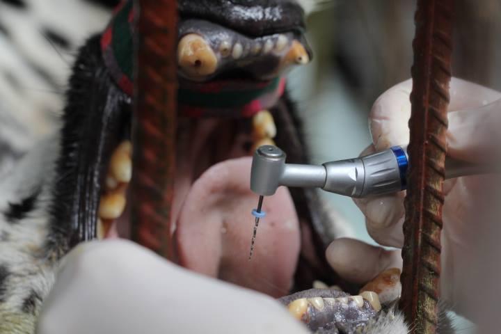 Cirugía dental de Sama