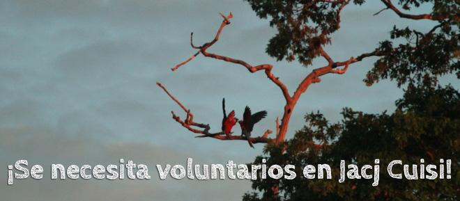 ¡Se necesita voluntarios en Jacj Cuisi!