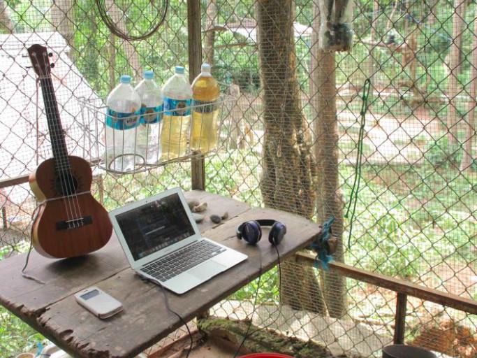 Estudio en la selva