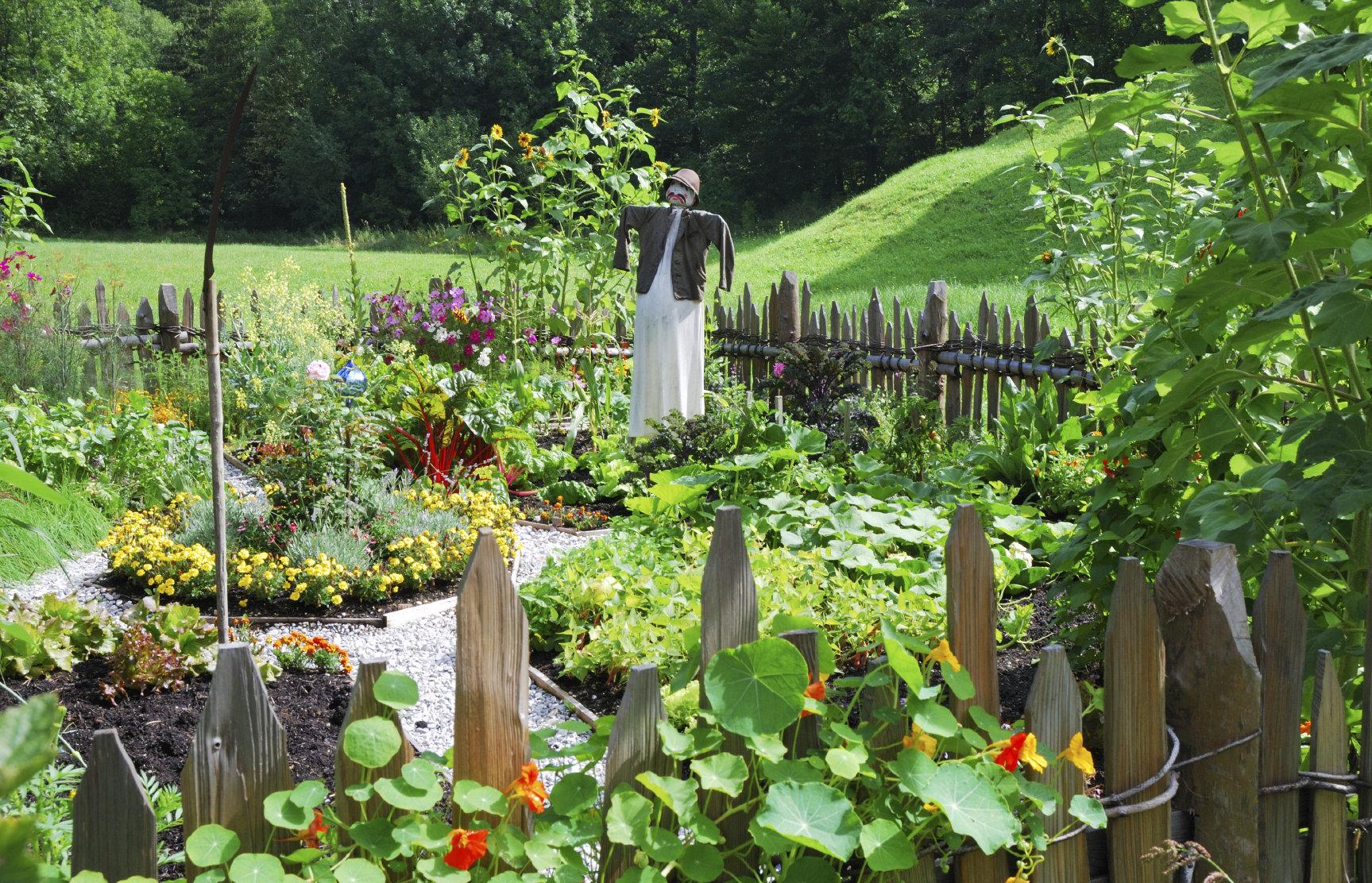 Design your Summer Veggie Garden