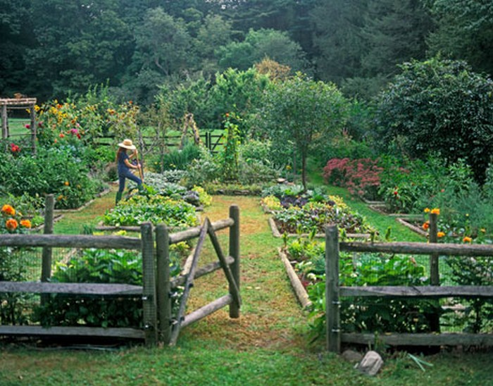 Garden Beds Nature Parklike Wooden Fence