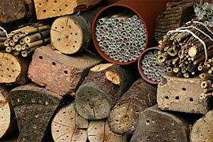 Solitary Bees have various nesting needs.