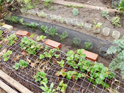 Seedlings Cover Birds Bottles Wire
