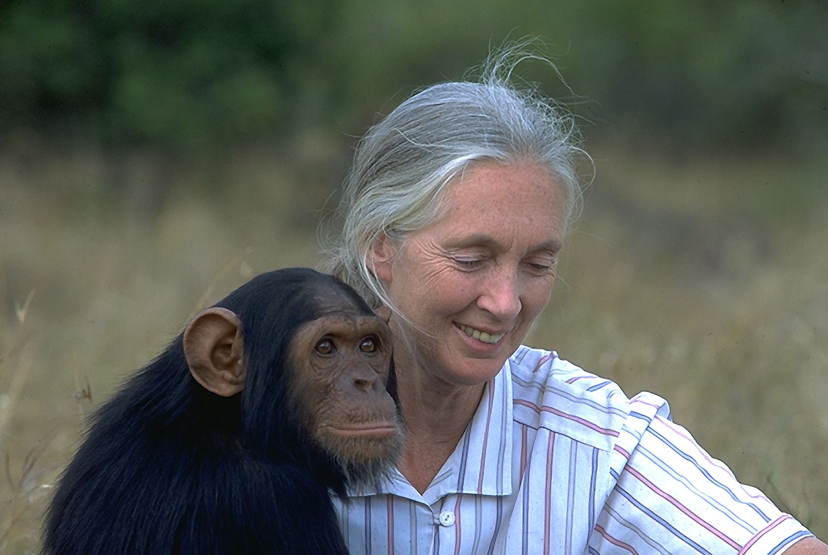 Aries Jane Goodall Chimp
