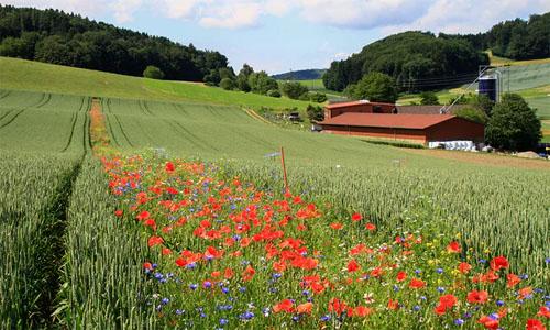 Pest Pesticides Reduction Flower Stripes Habitat in Fields