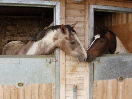 Horses neighboring stalls, Jupiter square Saturn
