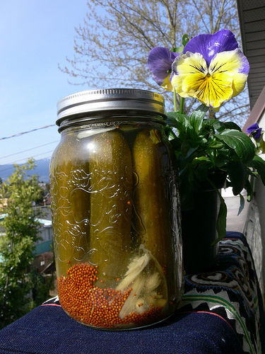 Pickles and Sauerkraut are terrific foods you can make from your veggie garden that are great Probiotic sources!