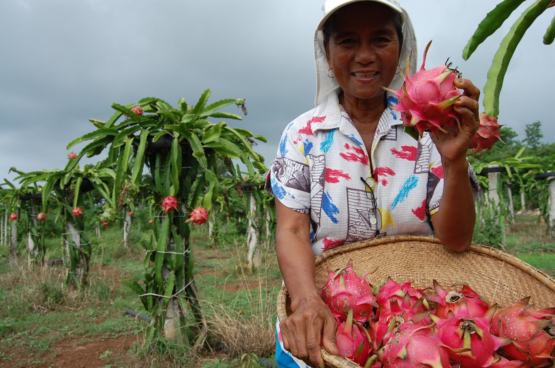 Dragon Fruit Lady, Philippines
