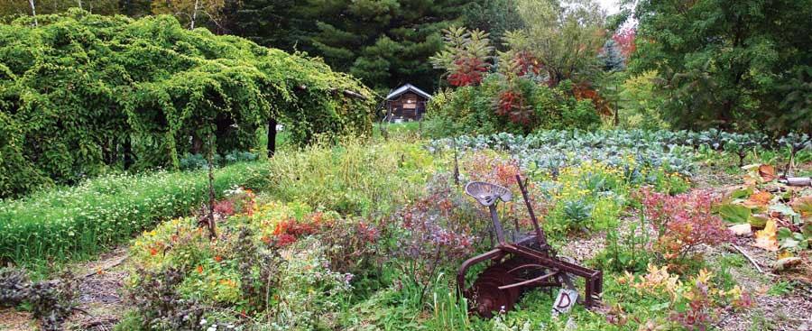 Edible Perennials ~ Vicki Mattern