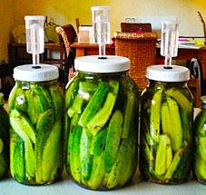Probiotic Pickles, Fairview Garden, Michelle Doran