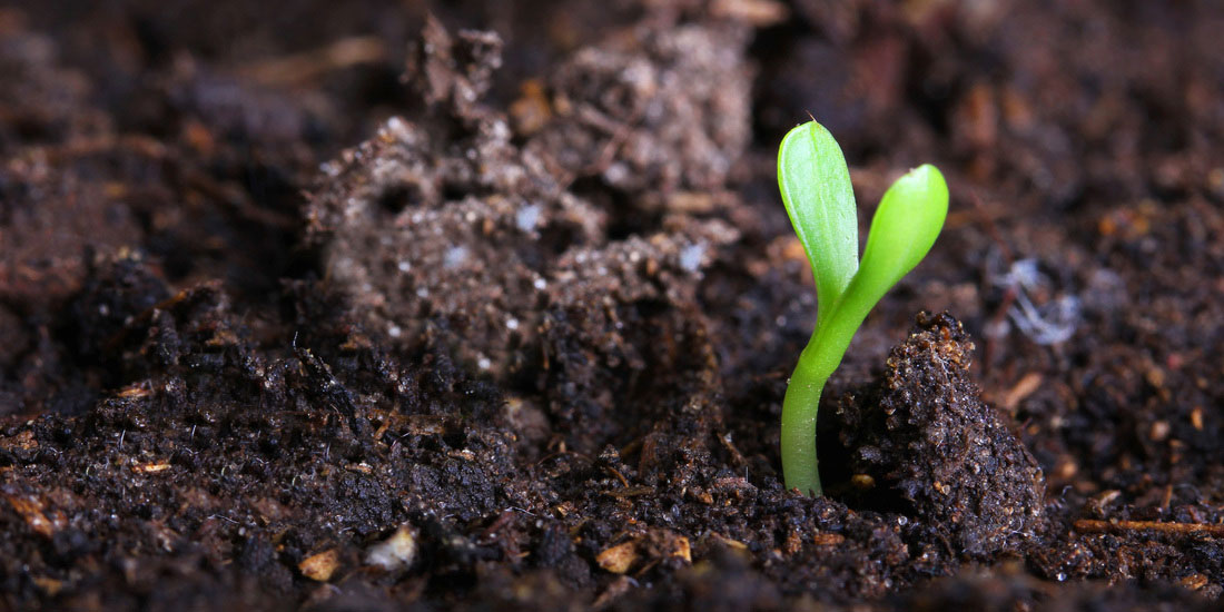 Soil Sprout