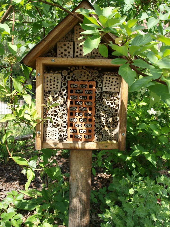 Solitary Bee, Insect Hotel, small on Post