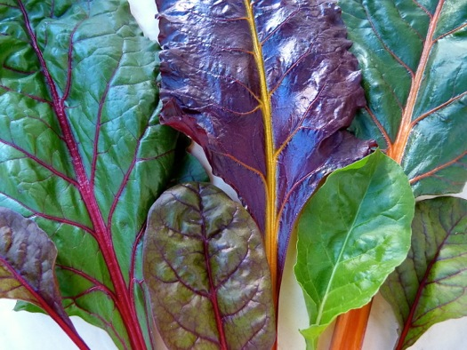 Chard Variety of Colors Leaves and Ribs