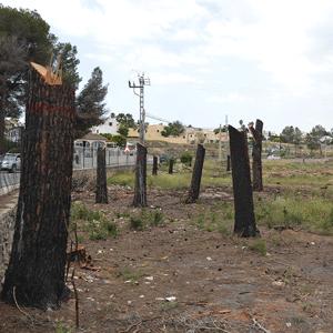 Javea, bomen die zijn afgebrand in het park Pinosol worden door Miguel Angel omgevormd tot beelden.