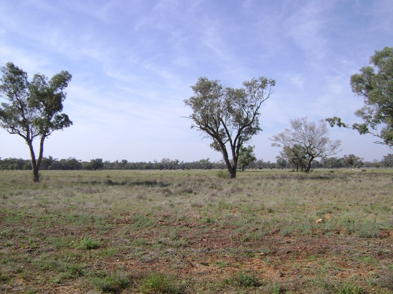 Grazed land in the Western region