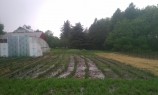 wet farm