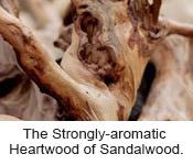The Heartwood of Sandalwood