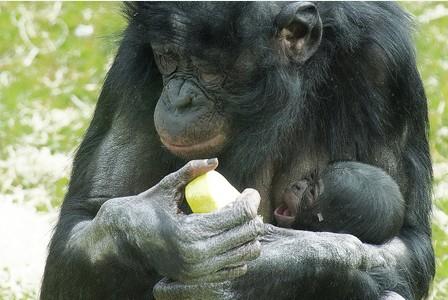 Twycross Zoo welcomes newborn baby