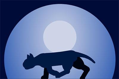 xray vision cat walk