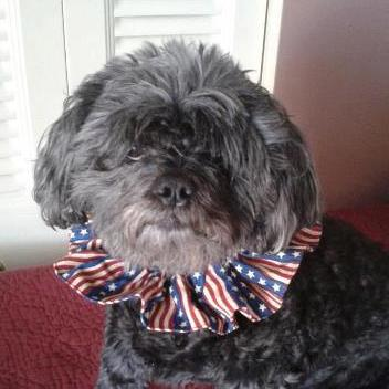 Gidget's Stars & Stripes Scrunchie Neck Ruffle