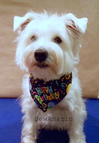 Penny's Yappy Birthday Bandana Collar Slipcover