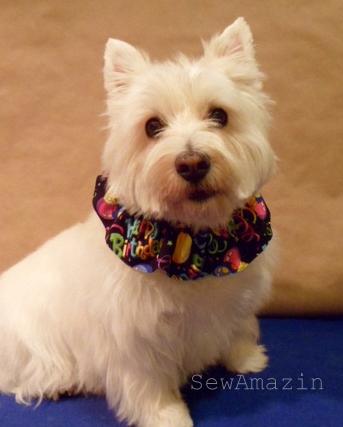 Yappy Birthday Dog Scrunchie Neck Ruffle