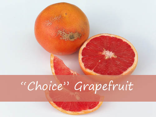 "Blemished ""Choice"" Grapefruit"