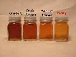 Fancy Maple Syrup Comparison