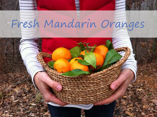 Mandarins. Yes, they come with all those leaves.