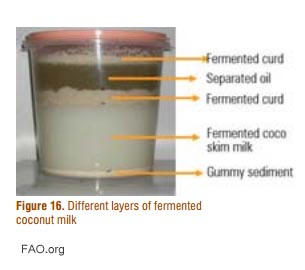 fermenting coconut milk to separate the oil