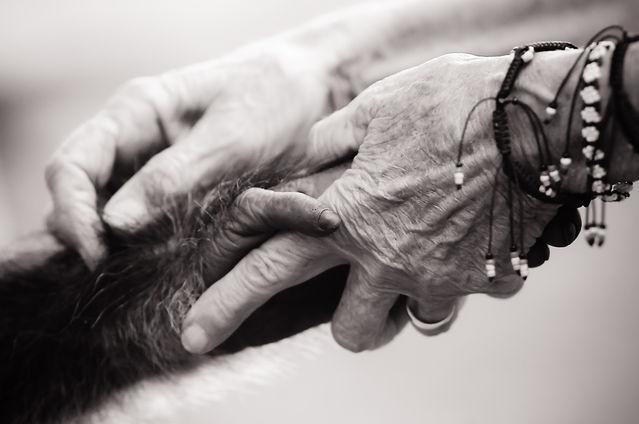 Jo-Anne McArthur / We Animals - weanimals.org