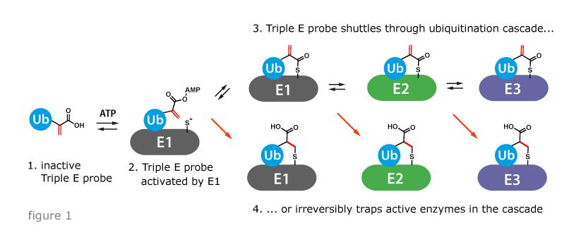 figure showing triple E probe mechanism