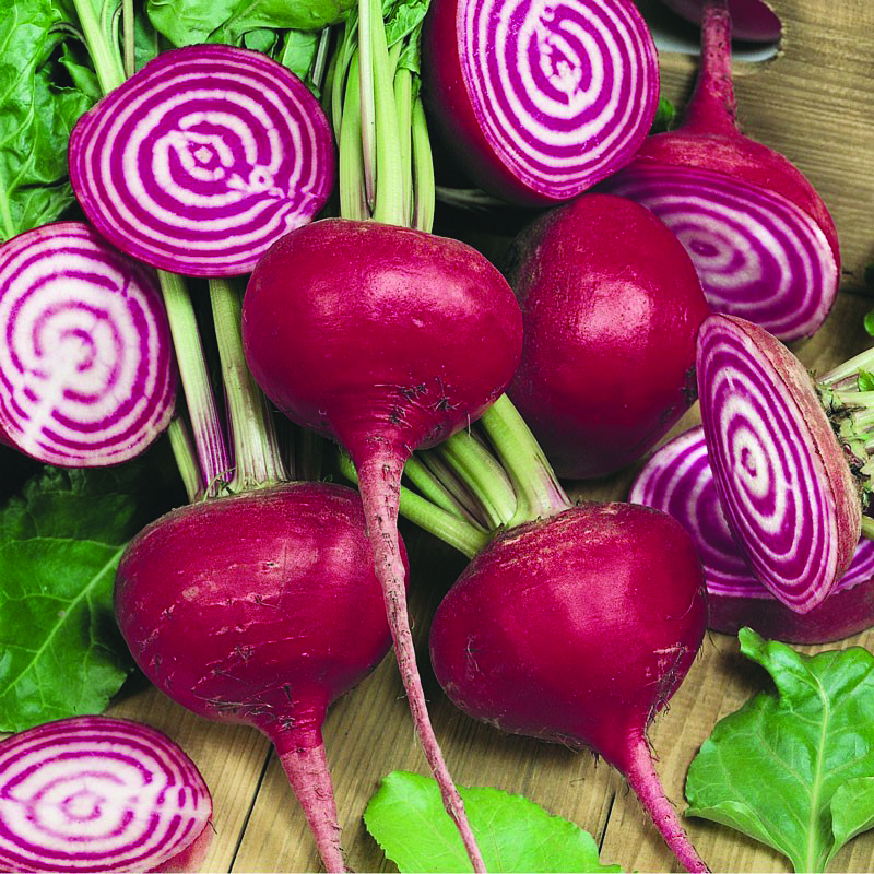 bunch of chioggia beets