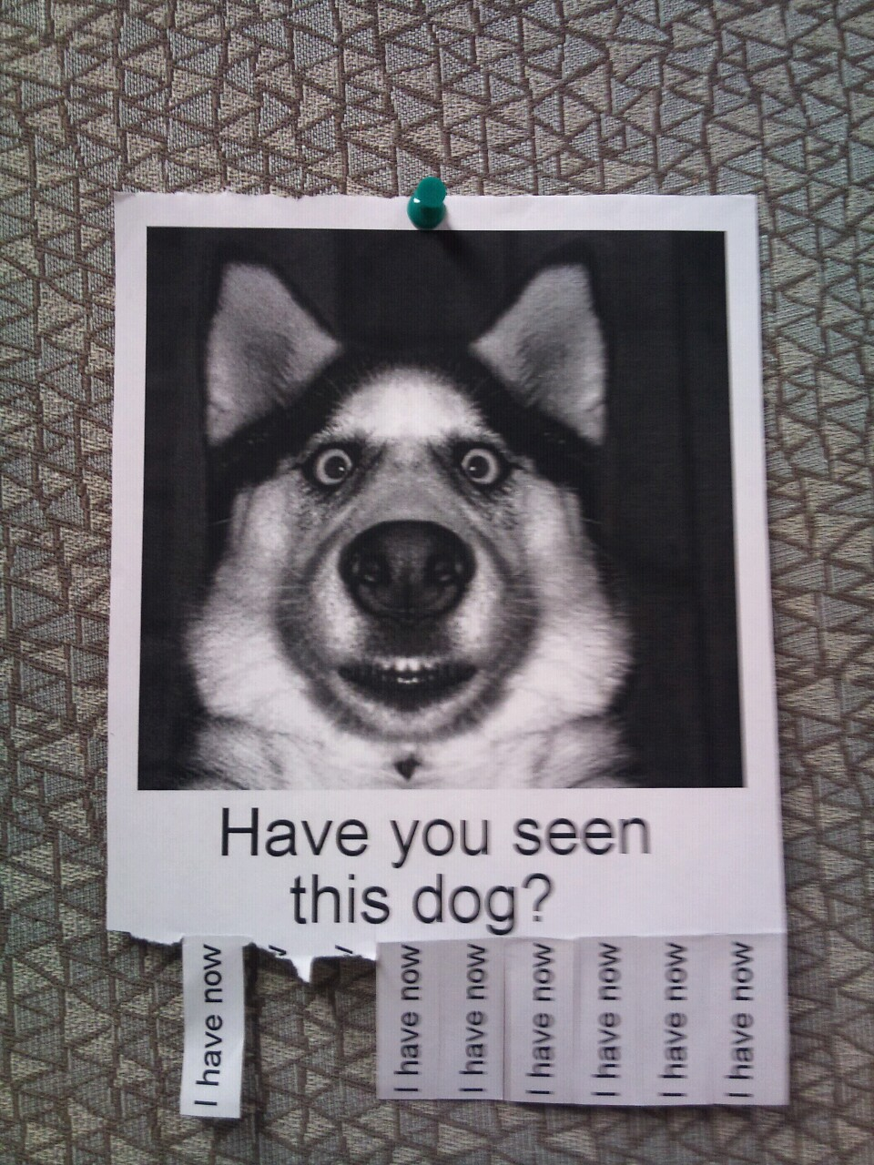This image is humourous, not an actual missing dog.