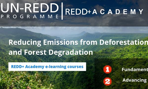 REDD+ Courses