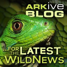 ARKive blog