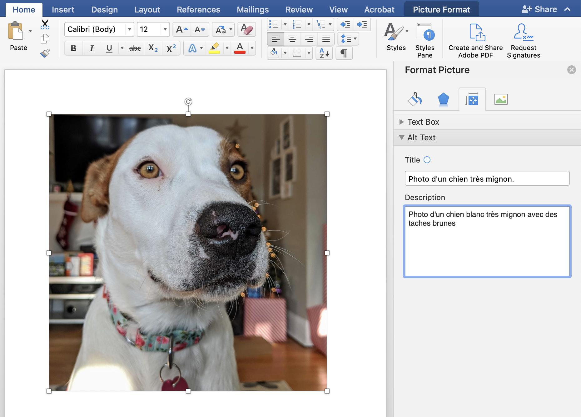 Capture d'écran d'une image de chien dans un document Word, avec le menu « Format de l'image » ouvert à droite et permettant d'ajouter la description « Photo d'un chien blanc très mignon avec des taches brunes »