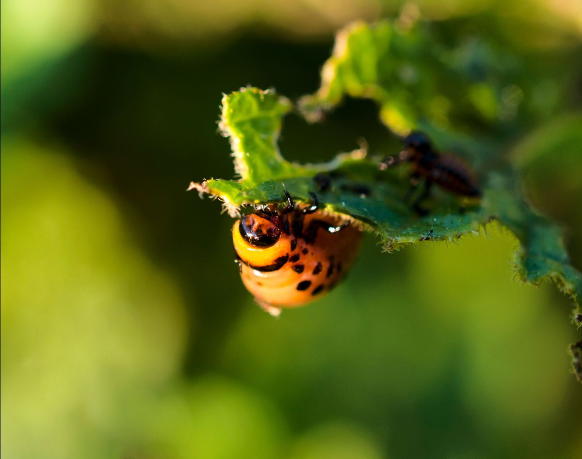Alternatives to Toxic Pesticides