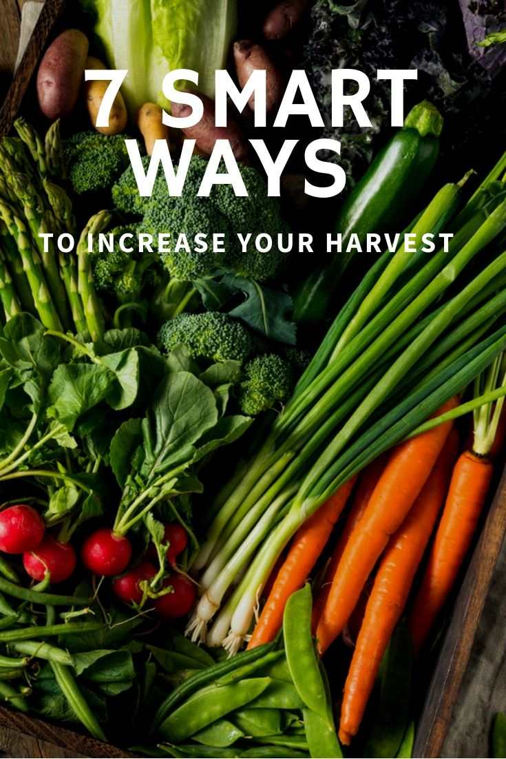 7 Smart Ways to Increase Your Harvest