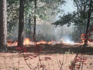 Oakland Nature Preserve - Prescribed Burn
