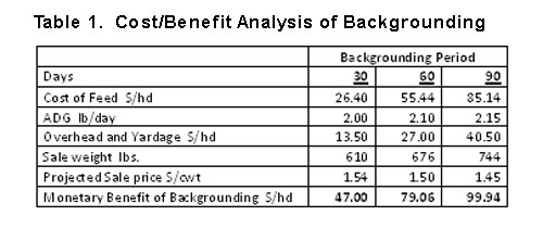 cost-benefit of backgrounding calves in fall 2011
