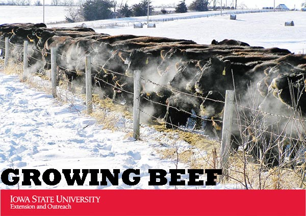Growing Beef newsletter from Iowa Beef Center