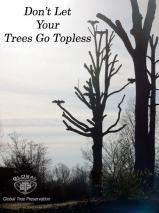 Don't Let Your Trees Go Topless