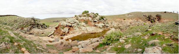 Lavender Trail Landscape