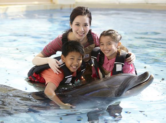 Meet a Dolphin, Penguin or Seal at Ocean Park